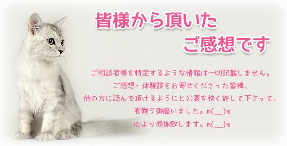 cat_18